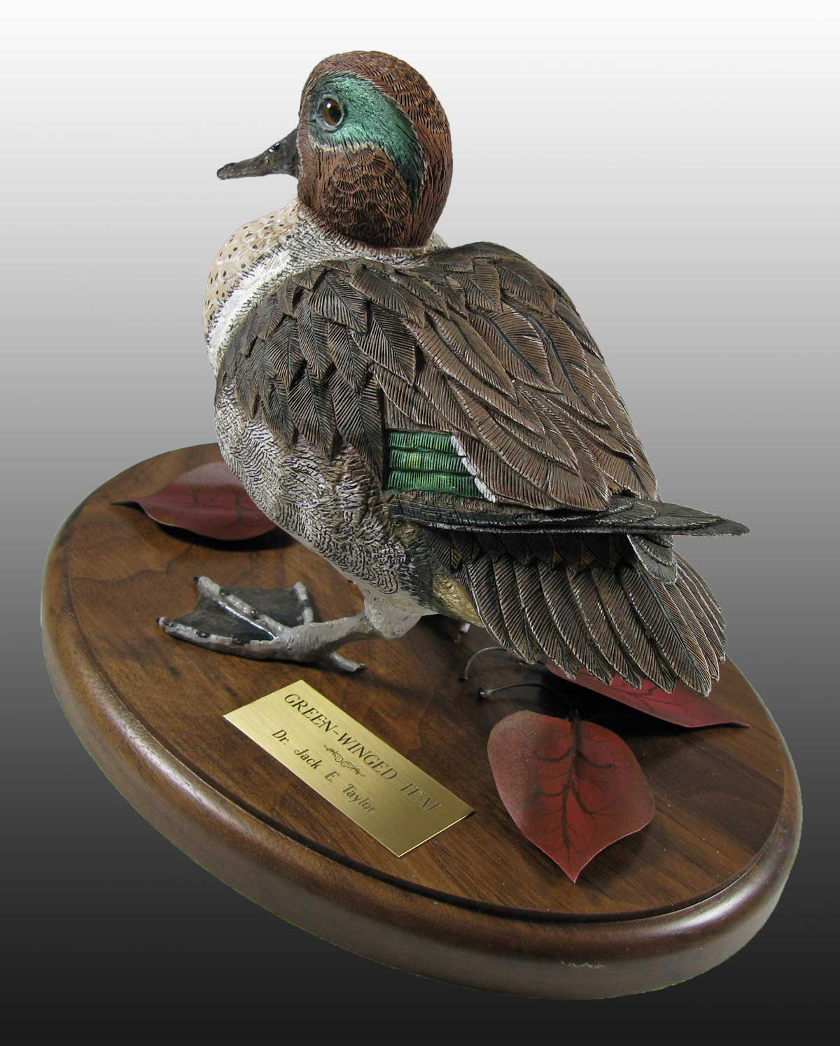 Green Wing Teal - Standing1