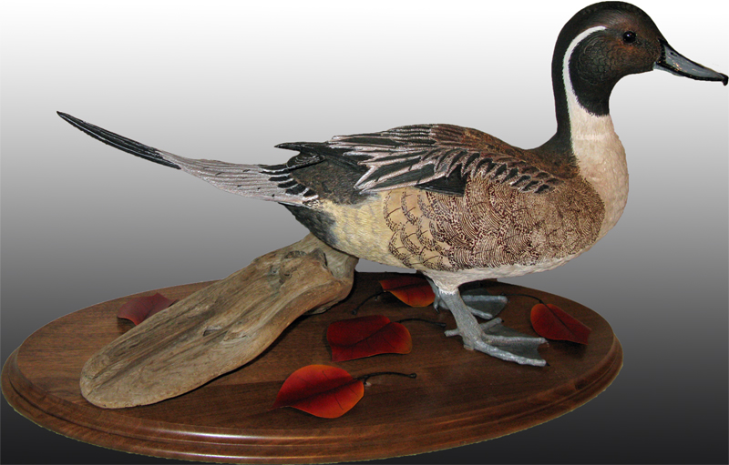 Standing Pintail